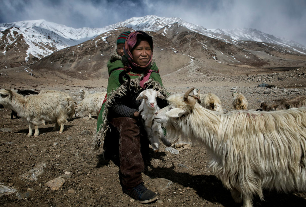 Changpa with goat