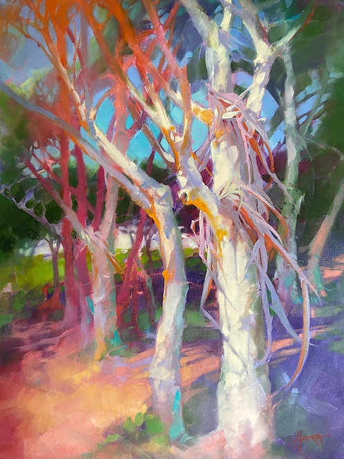 "Signed ""Alzora"" Oil on Canvas - Eucalyptus Trees"