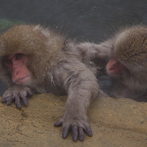 Zousmer Snow Monkeys 28