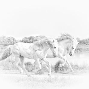 Zousmer Horses of Camargue 12