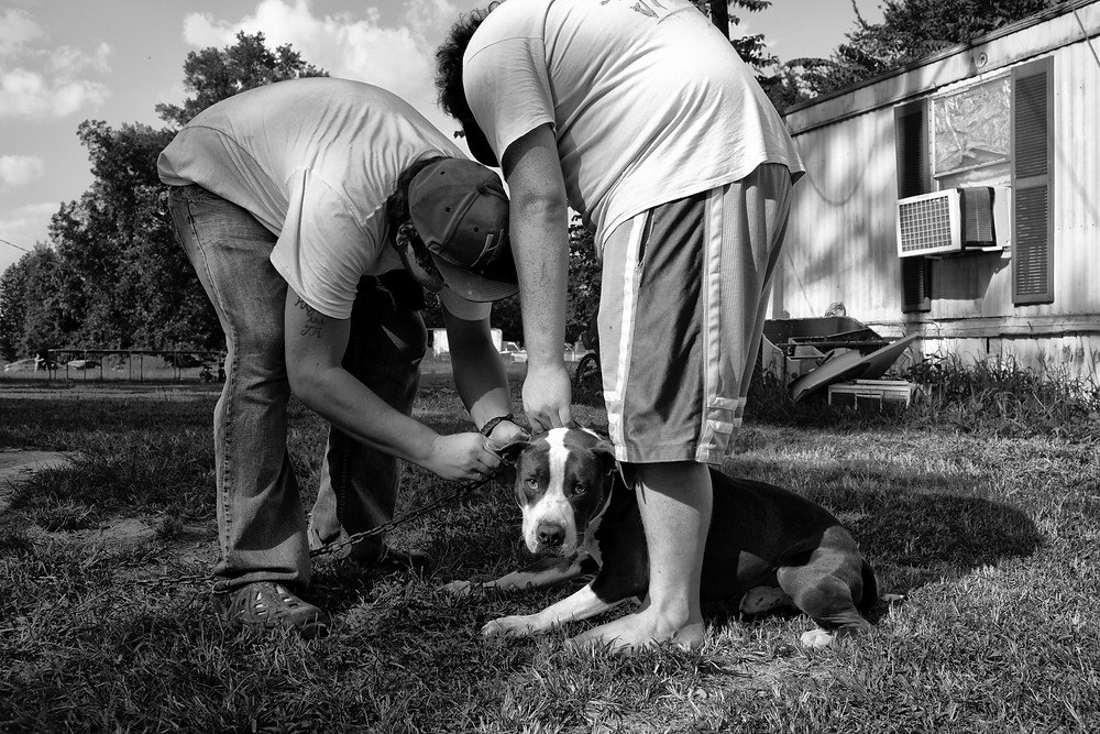 Two people examining dog's ear