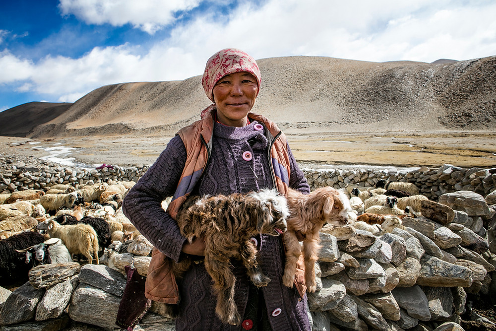 Changpa woman with goat