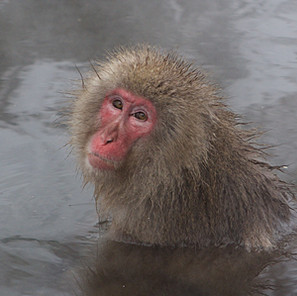 Zousmer Snow Monkeys 20