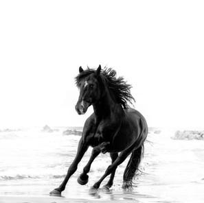 Zousmer Horses of Camargue 2