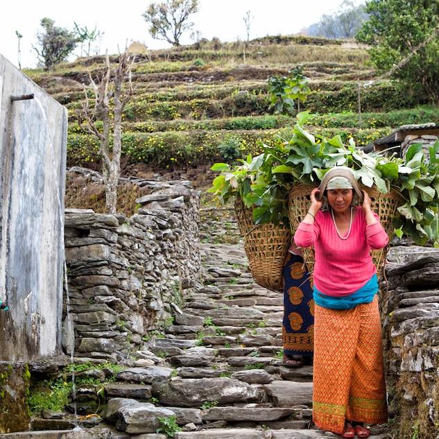 Zousmer Nepal 15