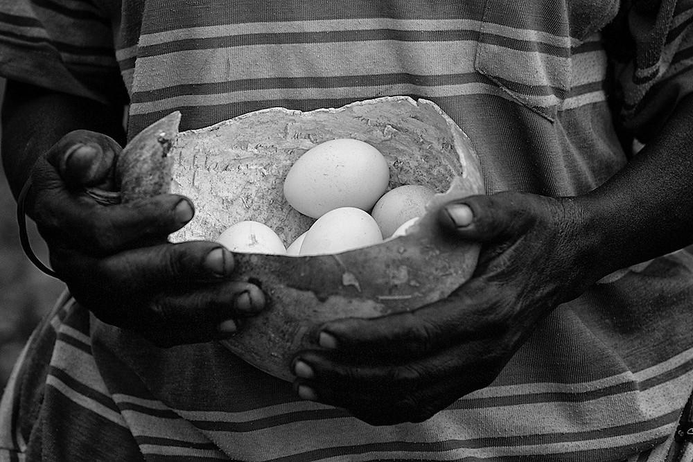 basket of eggs held in hands