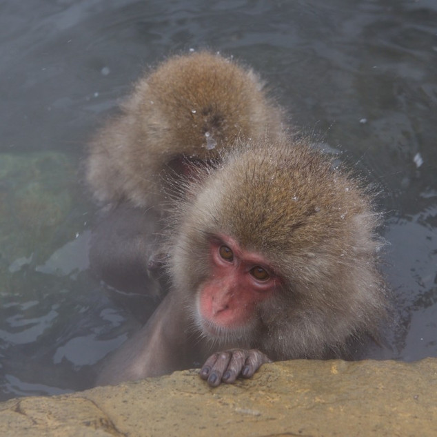 Zousmer Snow Monkeys 14