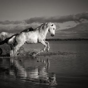 Zousmer Horses of Camargue 19