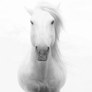 Zousmer Horses of Camargue 3