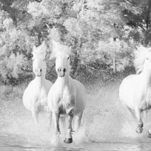 Zousmer Horses of Camargue 7