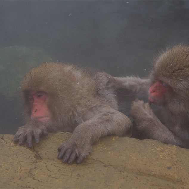 Zousmer Snow Monkeys 29