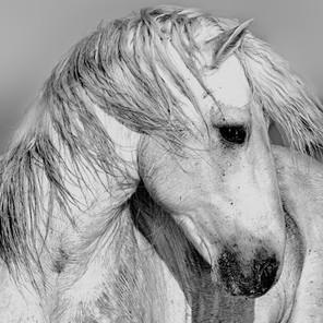 Zousmer Horses of Camargue 15