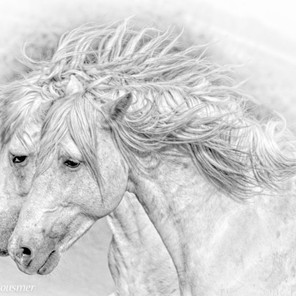 Zousmer Horses of Camargue 9