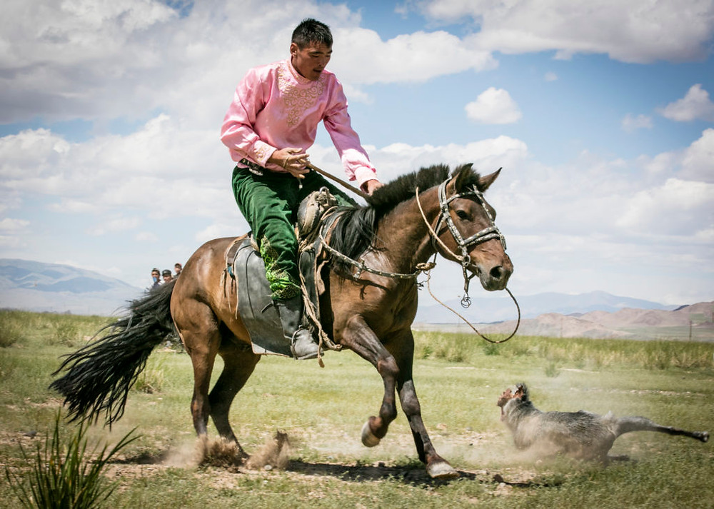 Man in pink shirt on horse