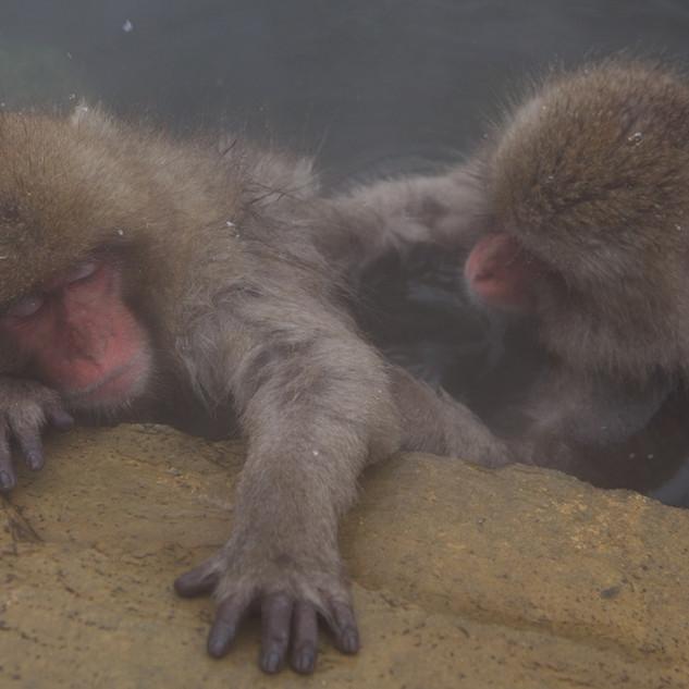 Zousmer Snow Monkeys 30