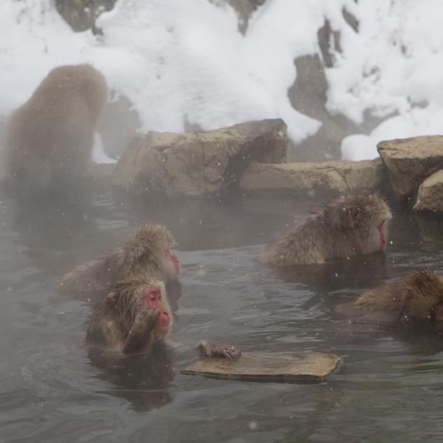 Zousmer Snow Monkeys 9