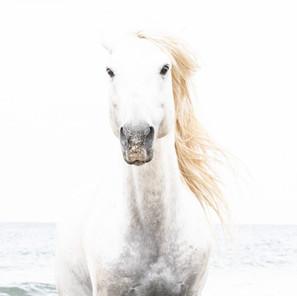 Zousmer Horses of Camargue 5