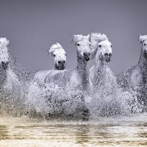 Zousmer Horses of Camargue 18