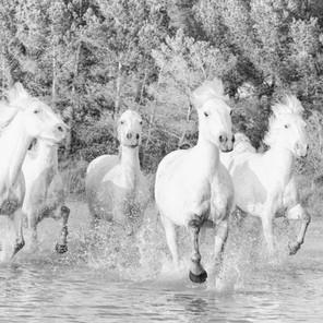 Zousmer Horses of Camargue 6