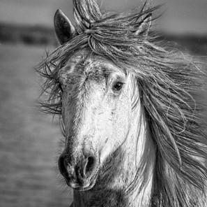 Zousmer Horses of Camargue 26
