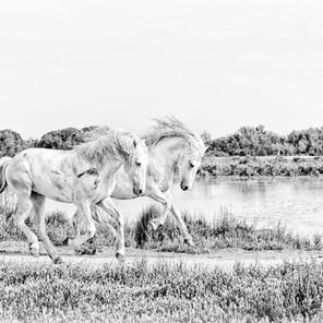 Zousmer Horses of Camargue 1