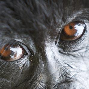 Zousmer Rwanda Gorillas 10