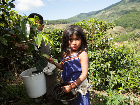 """Children of the Coffee"" inspires documentary by Gray Frederickson"