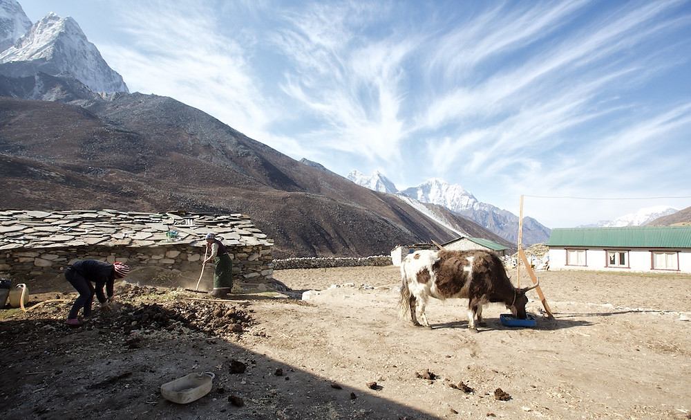 Two people working on ground, cow beside them