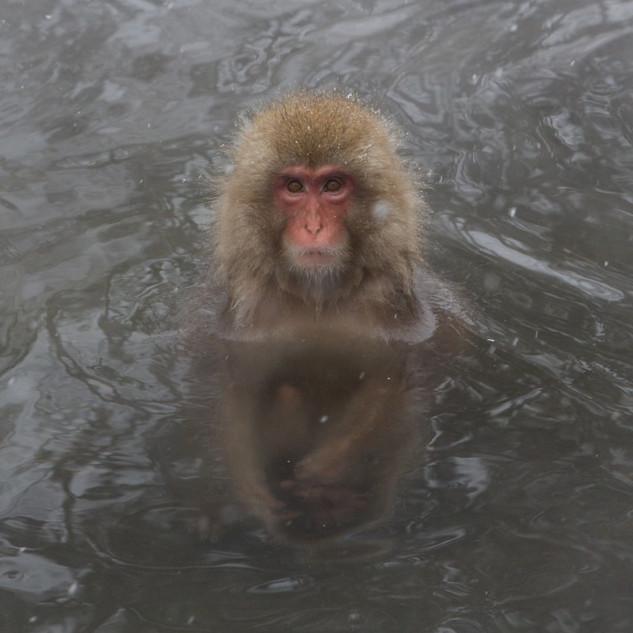Zousmer Snow Monkeys 3