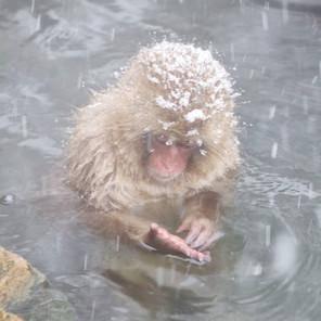Zousmer Snow Monkeys