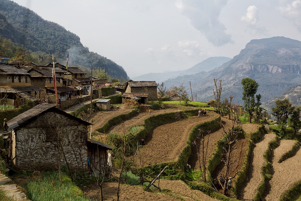 Nepali terraces