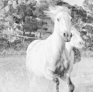 Zousmer Horses of Camargue 8