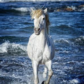 Zousmer Horses of Camargue 25
