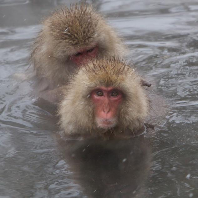 Zousmer Snow Monkeys 6
