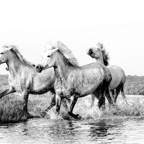 Zousmer Horses of Camargue 13