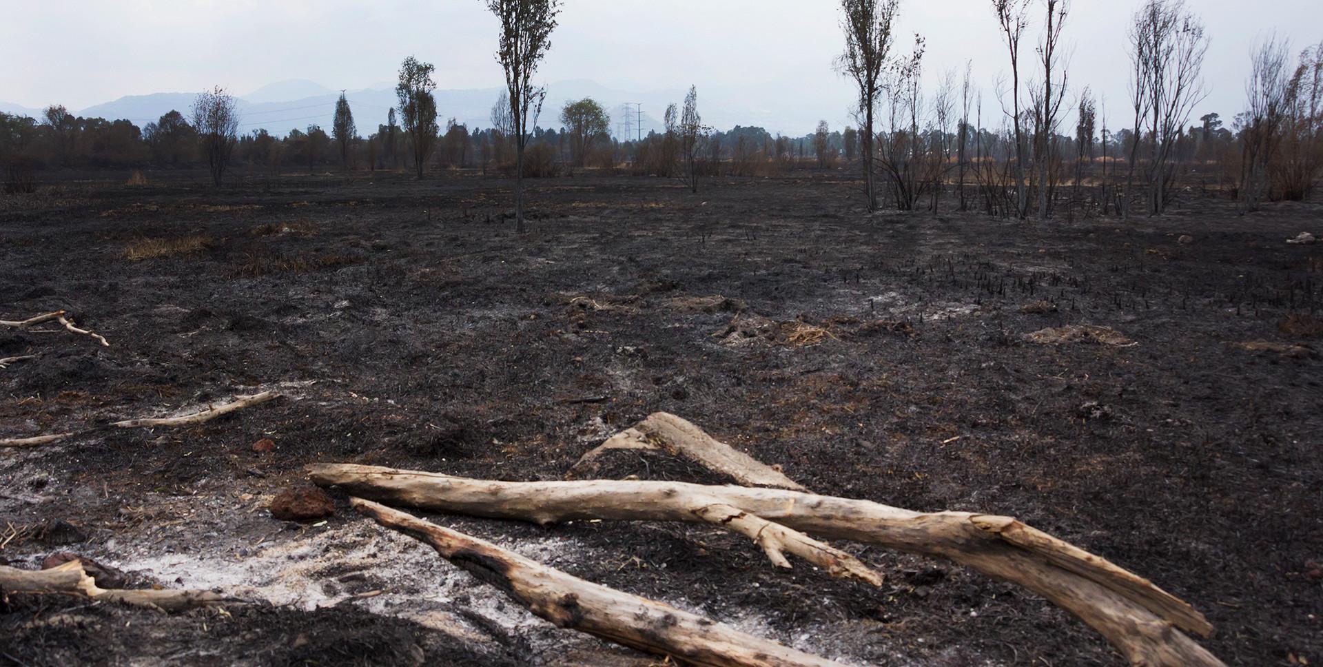Incendio en el Parque Ecológico de Xochimilco (2)