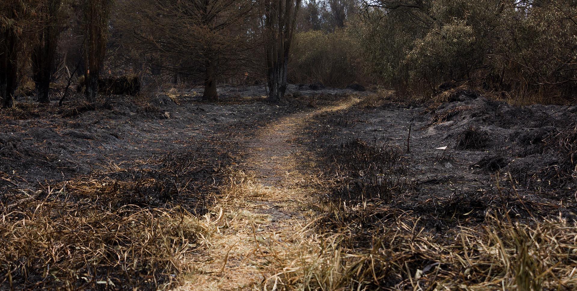 Incendio en el Parque Ecológico de Xochimilco (1)