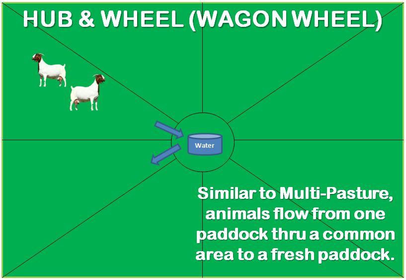 hub & wheel wagon wheel hub and spoke grazing pasture livestock