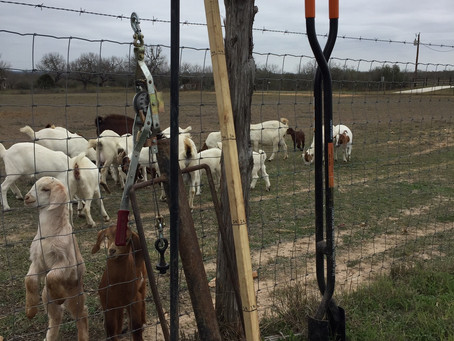 Tools You Need For Building a Livestock Fence