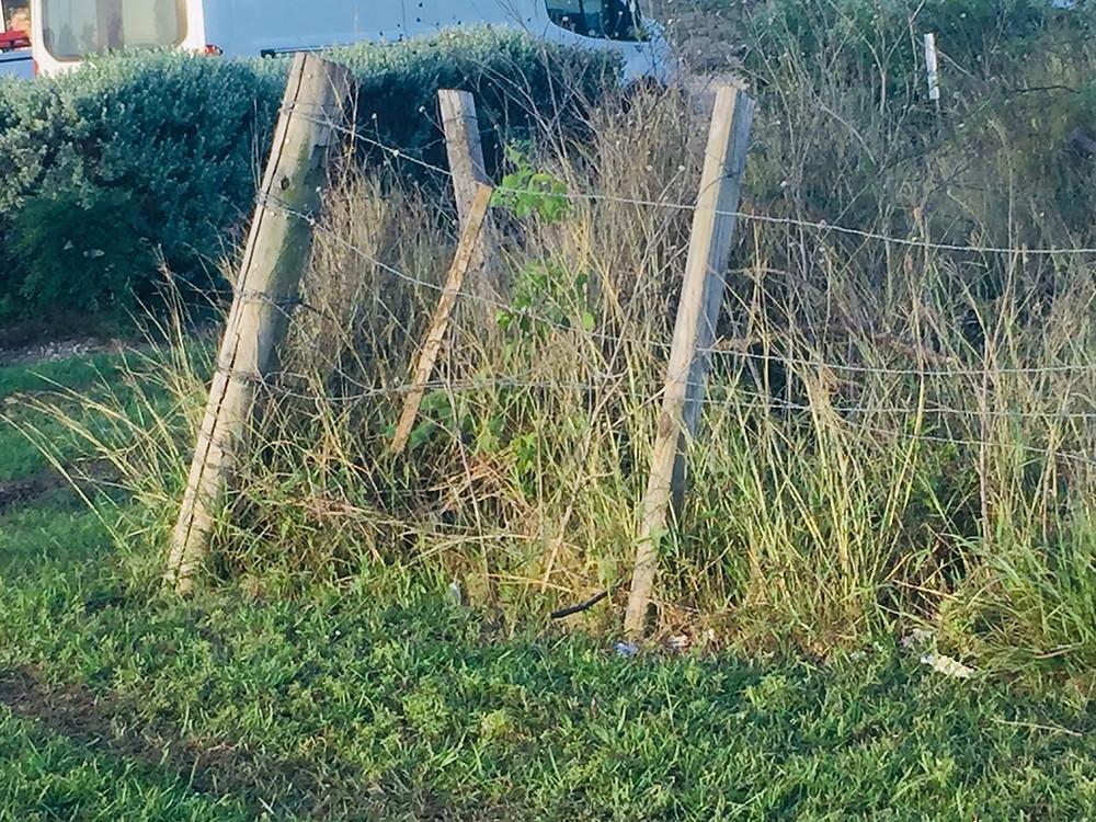 bad ideas for saving money on livestock fence