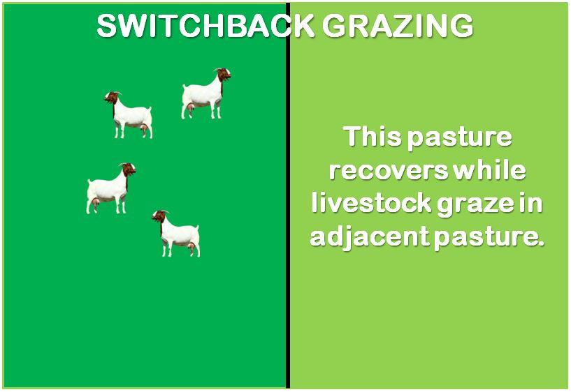 switchback grazing livestock