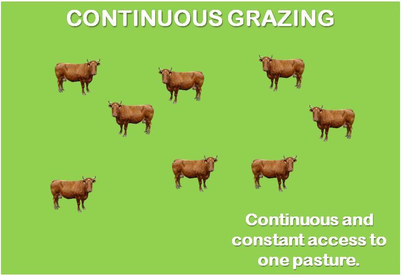 continuous grazing livestock