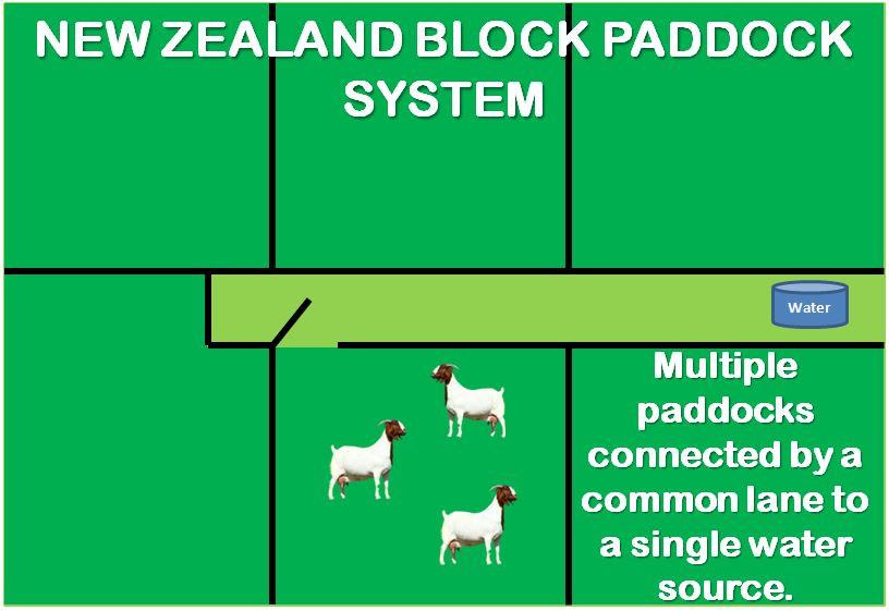 new zealand block paddock system