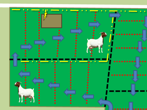 Our Pasture Management Plan & Planning Considerations for Your Farm