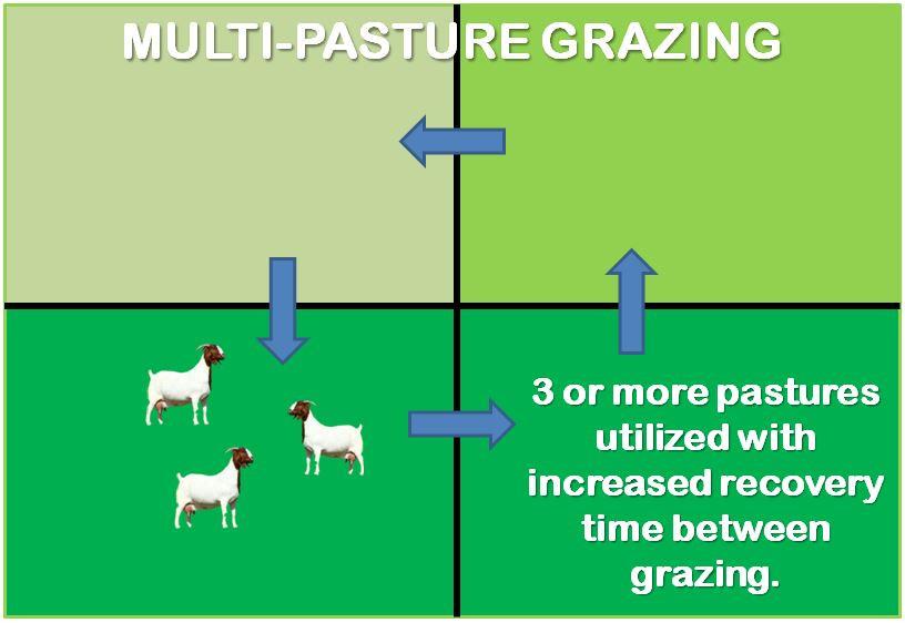 multi-pasture grazing livestock