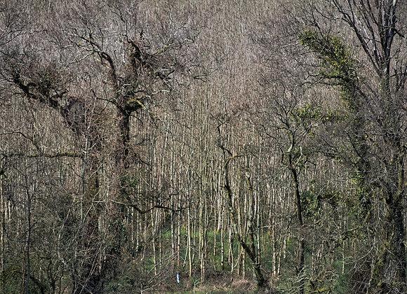 'Replenish', Framed Photograph on Fine Art Paper