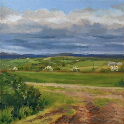 'Field II', Oil on Canvas