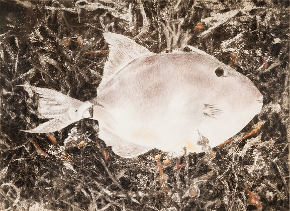 'Fish Out of Place', Photopolymer Etching, Hand-Tinted