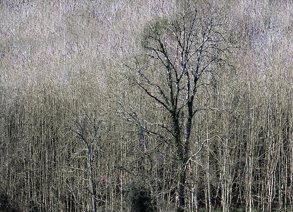'Renew', Framed Photograph on Fine Art Paper