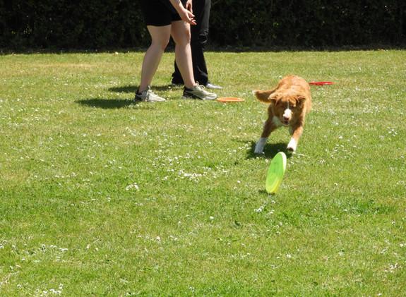 Go frisbee